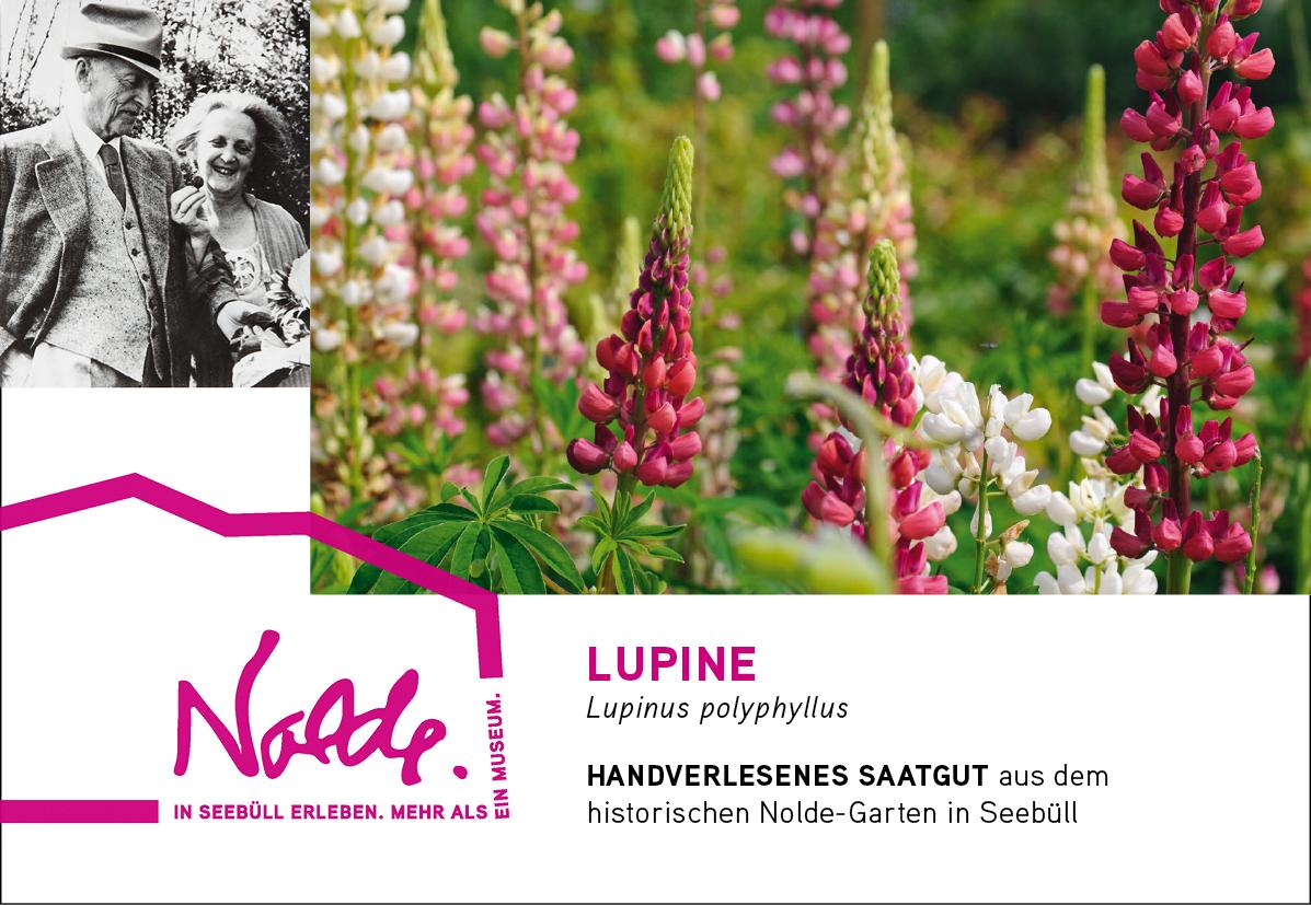 Seebüller Saatgut Lupine / Lupinus polyphyllus