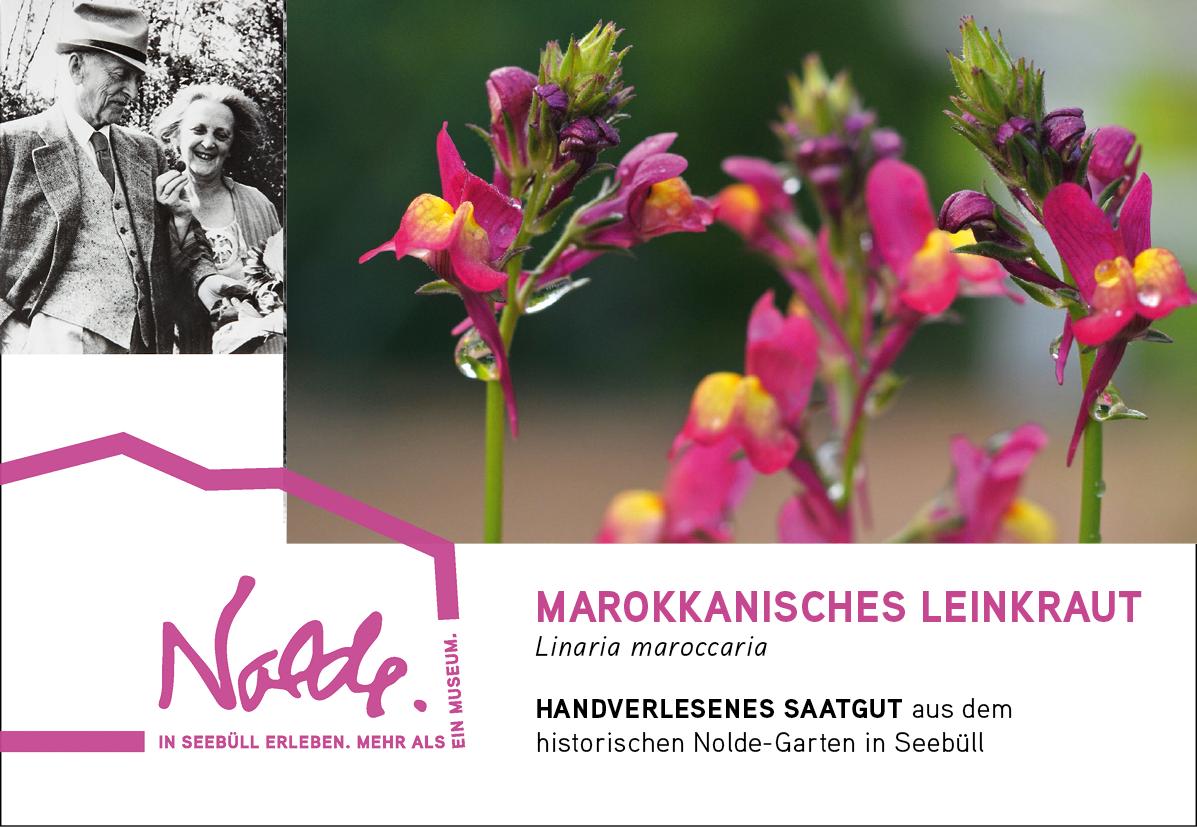 Seebüller Saatgut Leinkraut / Linaria maroccaria