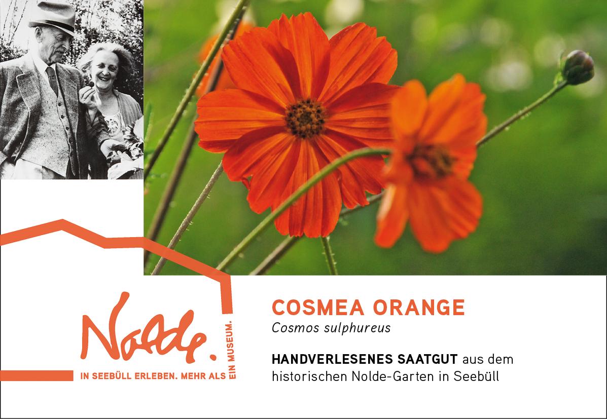 Seebüller Saatgut Cosmea orange / Cosmos sulphureus