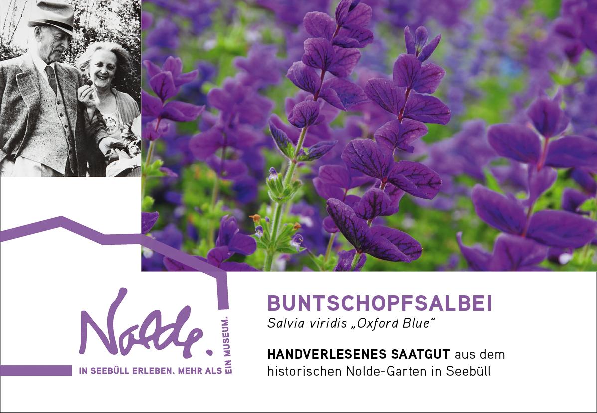 "Seebüller Saatgut Buntschopfsalbei / Salvia viridis ""Oxford"