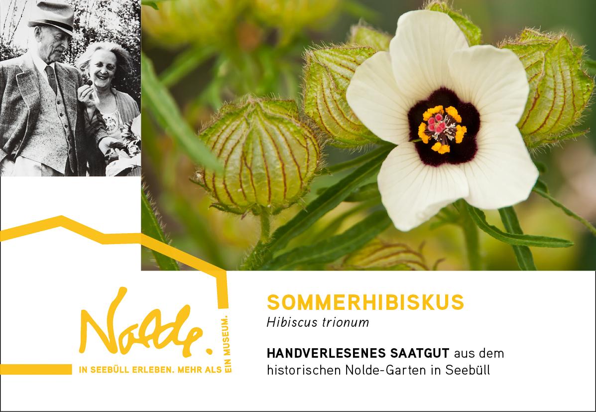 Seebüller Saatgut Sommerhibiskus / Hibiscus trionum