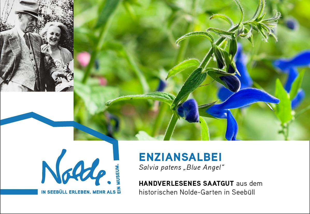 "Seebüller Saatgut Enziansalbei / Salvia patens ""Blue Angel"""