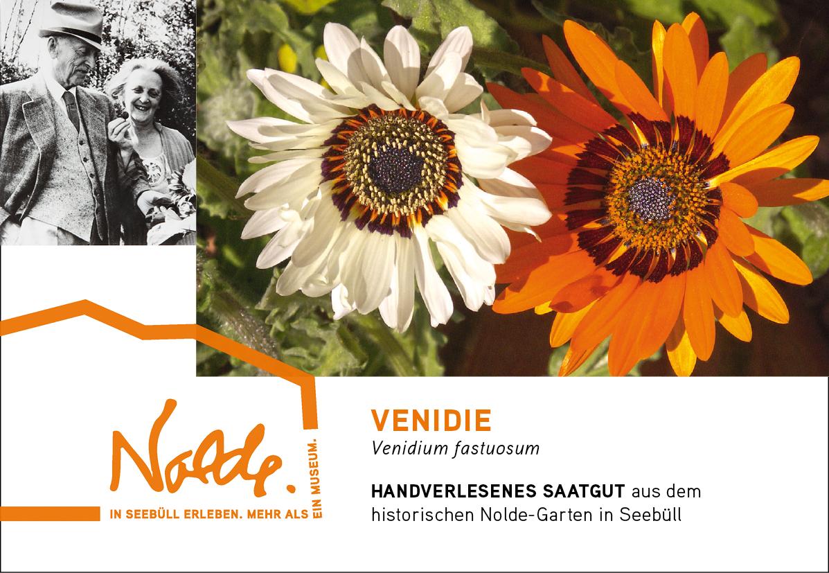 Seebüller Saatgut Venidie / Venidium fastuosum