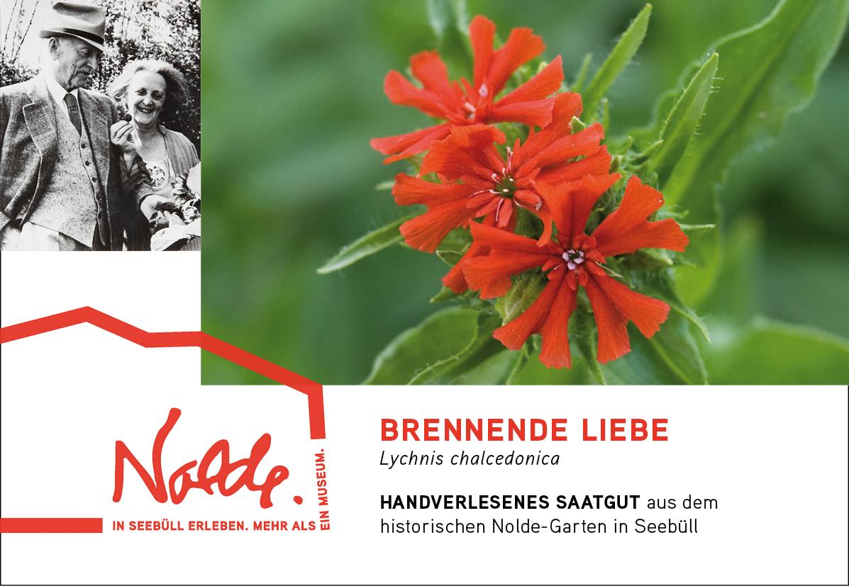 Seebüller Saatgut Brennende Liebe / Lychnis chalcedonica