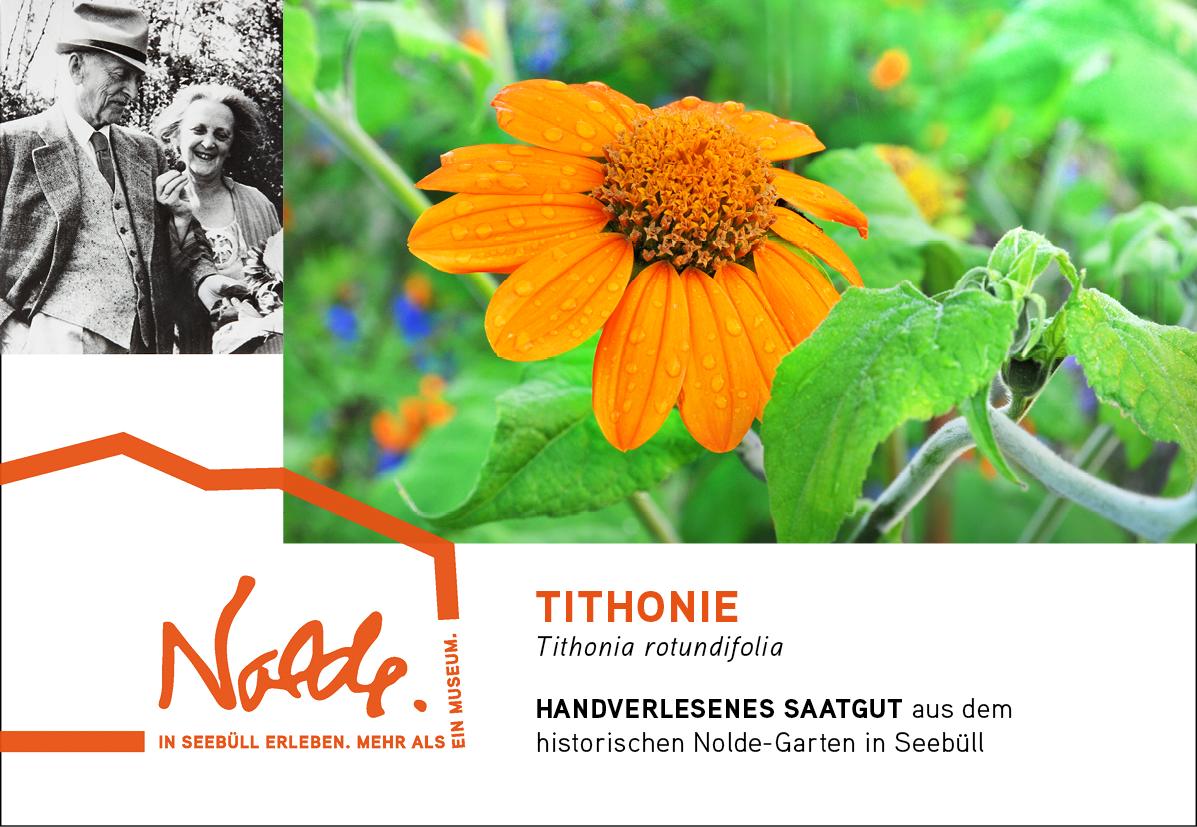 Seebüller Saatgut Tithonie / Tithonia rotundifolia