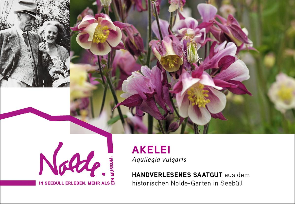 Seebüller Saatgut Akelei / Aquilegia vulgaris
